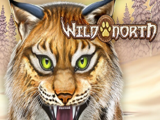 wild north - Wild North